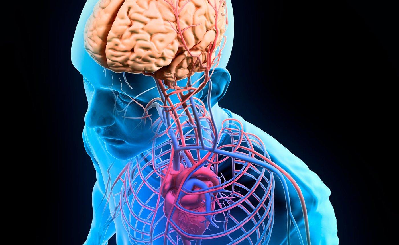 Human Anatomy and Physiology-I